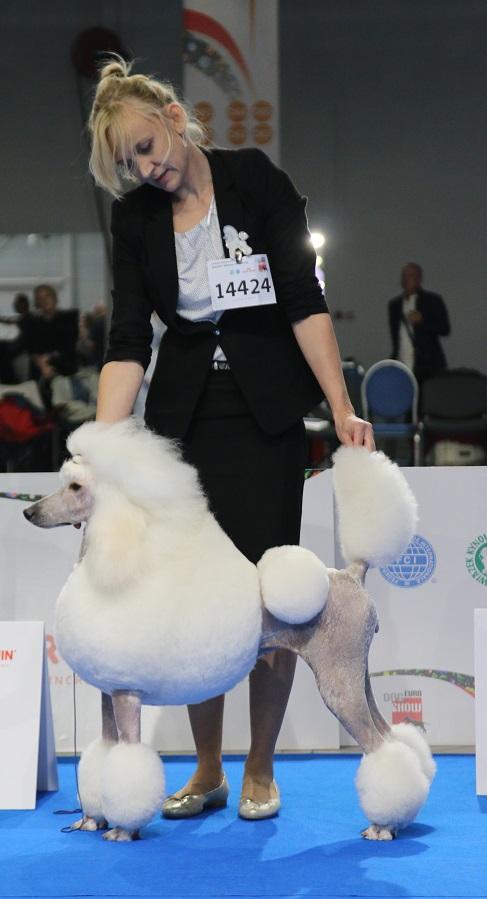 Jeden z większych sukcesów: 3 miejsce w klasie na Euro Dog Show. Warszawa 2018.